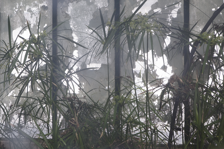carina martins, urupe - nature reflected through windows