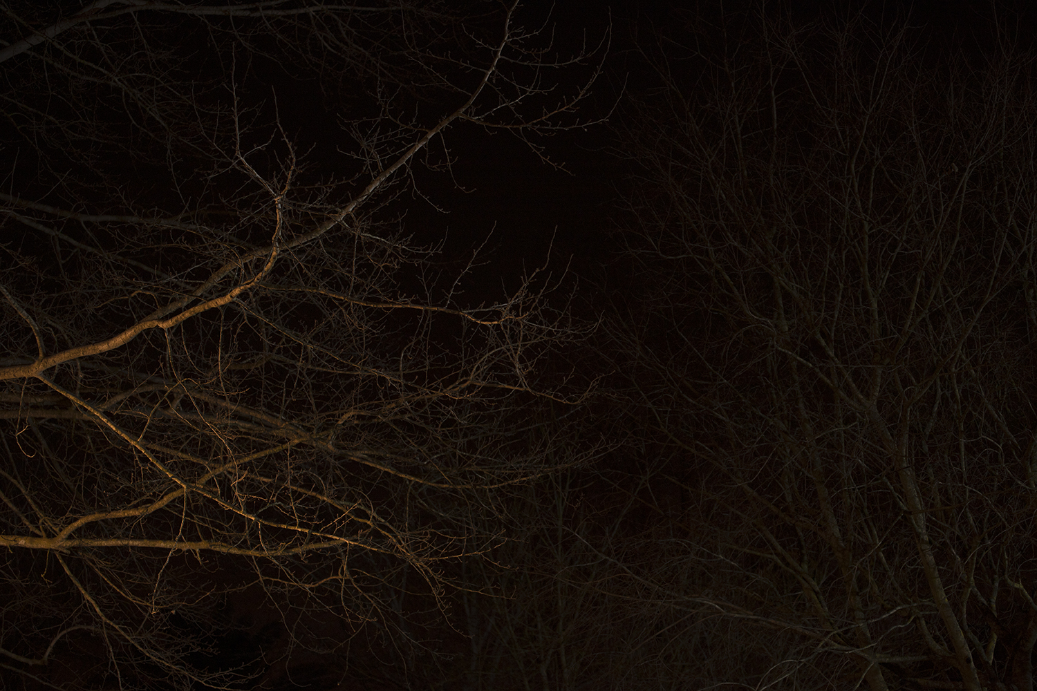 carina martins, we wander in circles through the night  and are consumed by fire - tree branches at night