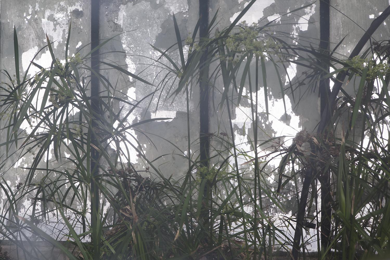 carina martins, urupe - reflexos de plantas em janelas 1