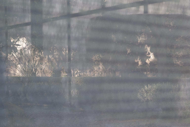 carina martins, urupe - nature reflected through windows 3