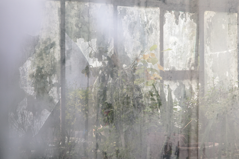 carina martins, urupe - reflexos de plantas em janelas 7