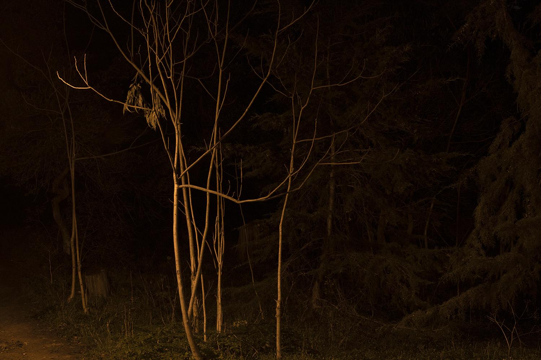 carina martins, physis - ramos de arvores a noite
