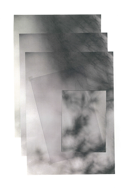 carina martins, snips of a winter sky - shadow of a tree in a pink wall