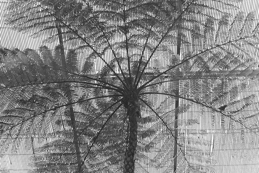 carina martins, herbarium - palm tree