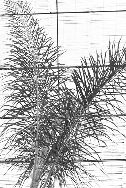 carina martins, herbarium - palm tree leaf