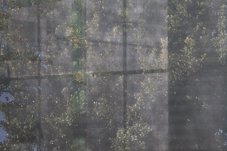 carina martins, urupe - reflexos de plantas em janelas 10