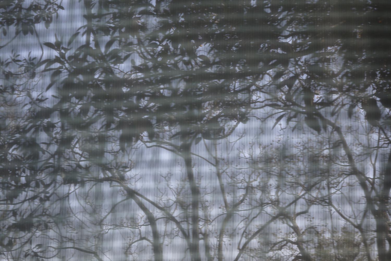 carina martins, urupe - reflexos de plantas em janelas 2