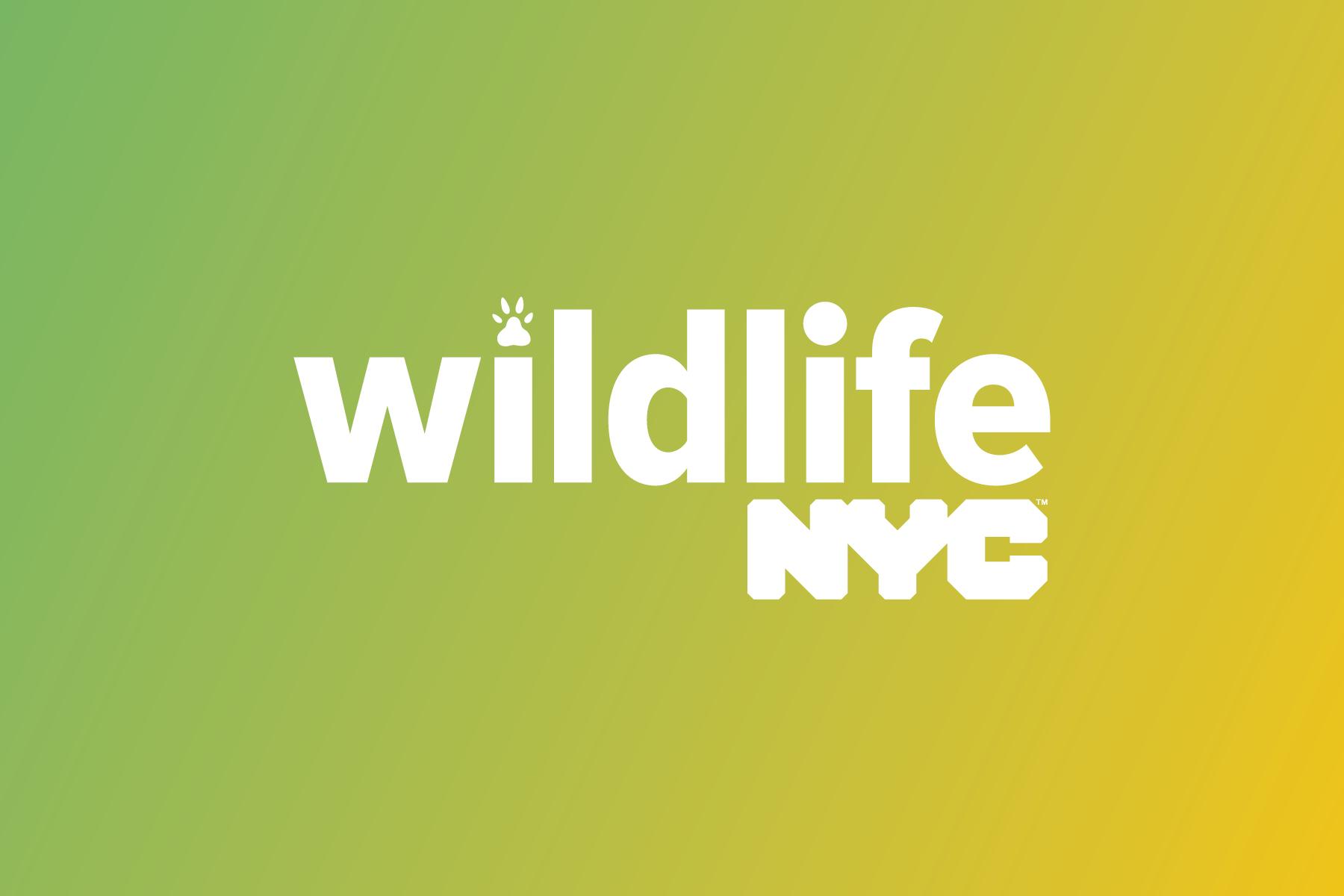 Wildlife NYC - Hayan Ava Design