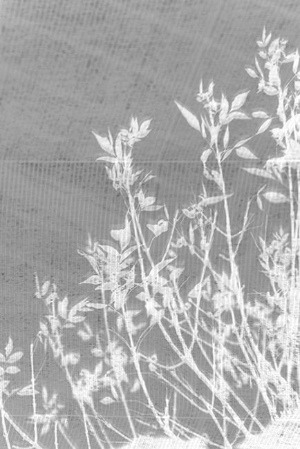 carina martins, herbarium - plant