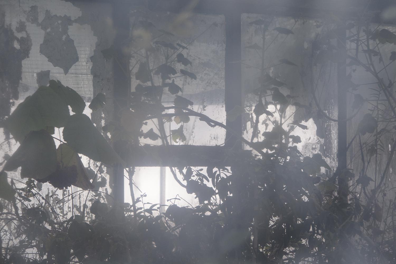 carina martins, urupe - reflexos de plantas em janelas 3