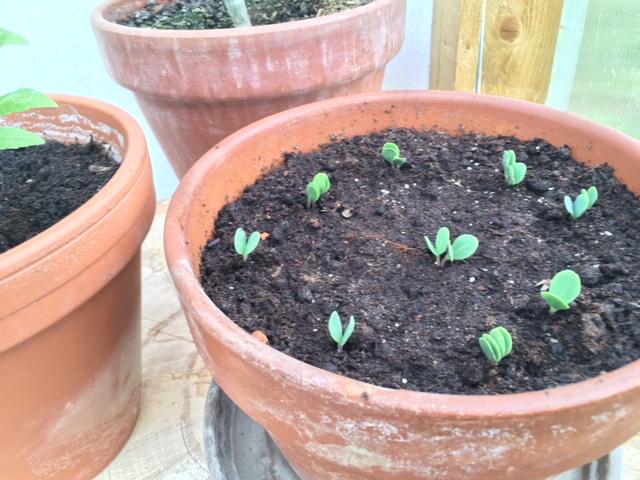 Seed Sowing Workshop Milton Keynes Arts Centre