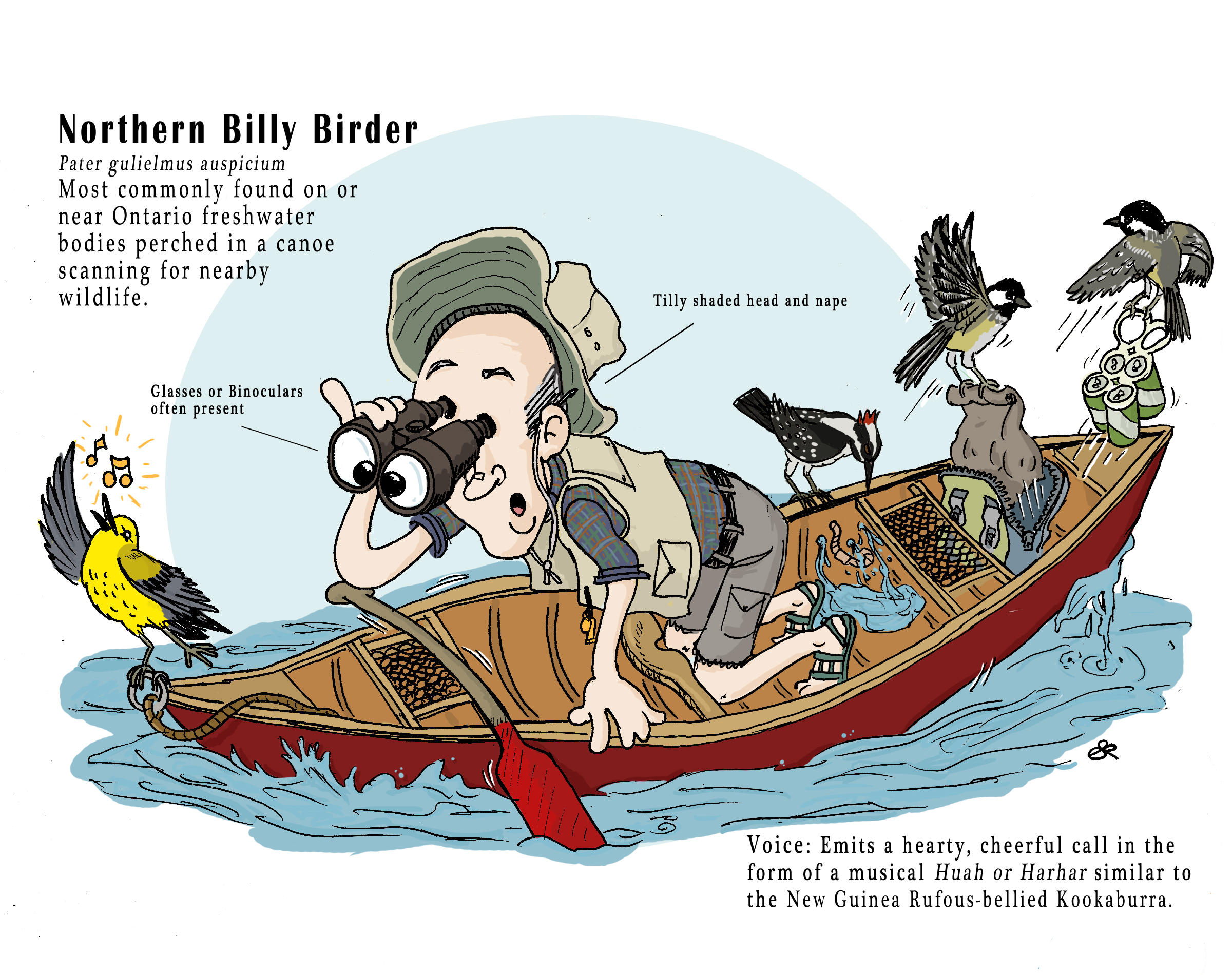 A Guide To Northern Ontario Birders