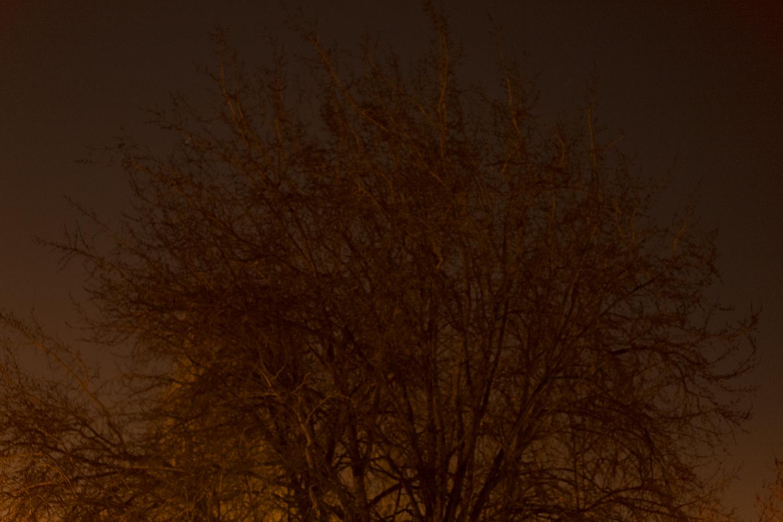 carina martins, vagueamos na noite sem sentido e somos devorados pelo fogo - sombra a noite