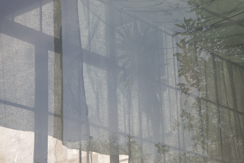carina martins, urupe - reflexos de plantas em janelas 9