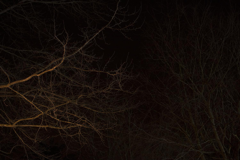carina martins, vagueamos na noite sem sentido e somos devorados pelo fogo - ramos de arvores a noite