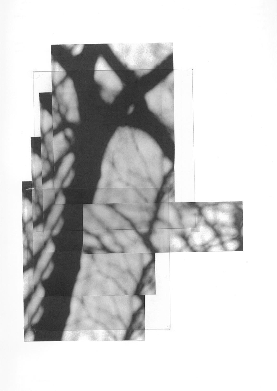 carina martins, retalhos do céu de inverno - recortes de árvores 2