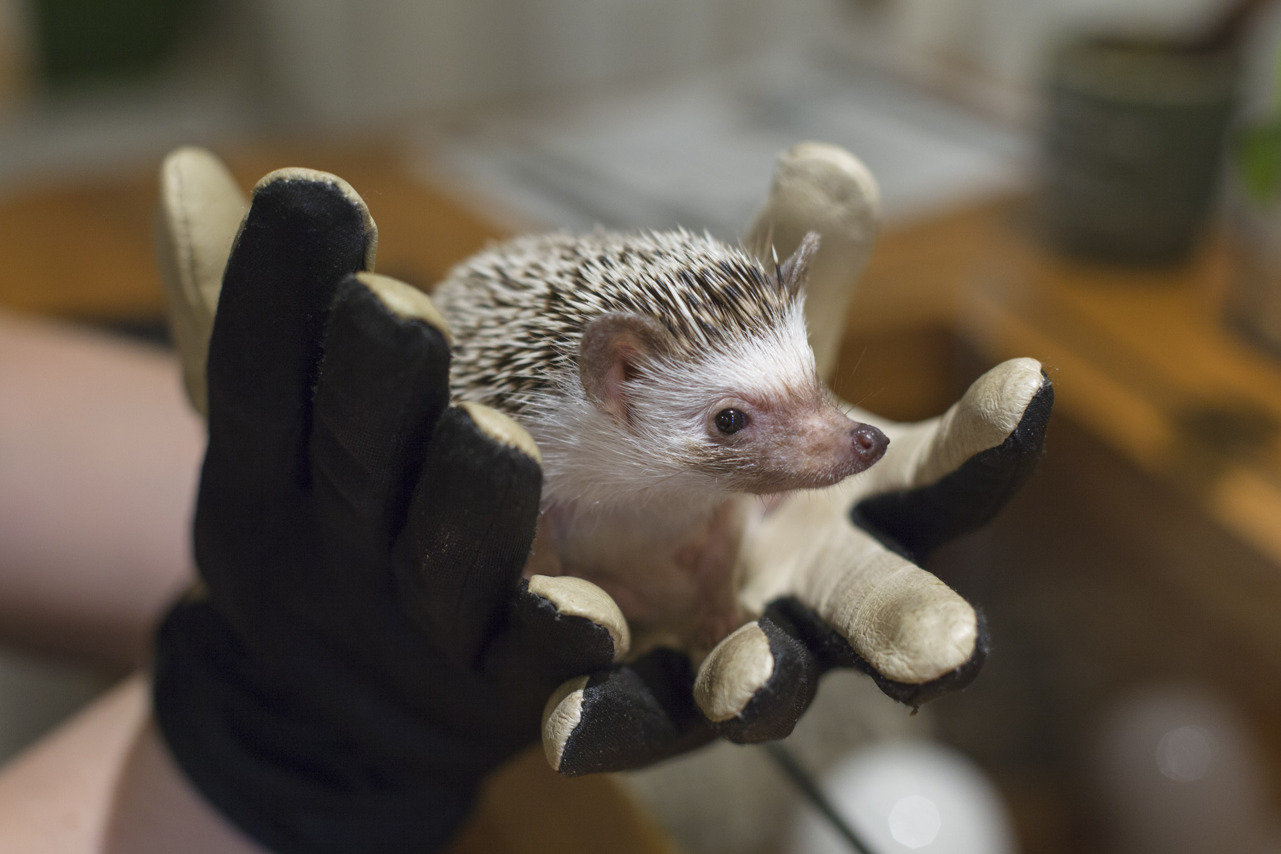 Harry S Hedgehog Cafe Various Locations When In Tokyo Tokyo S Art Design And Architecture Guide